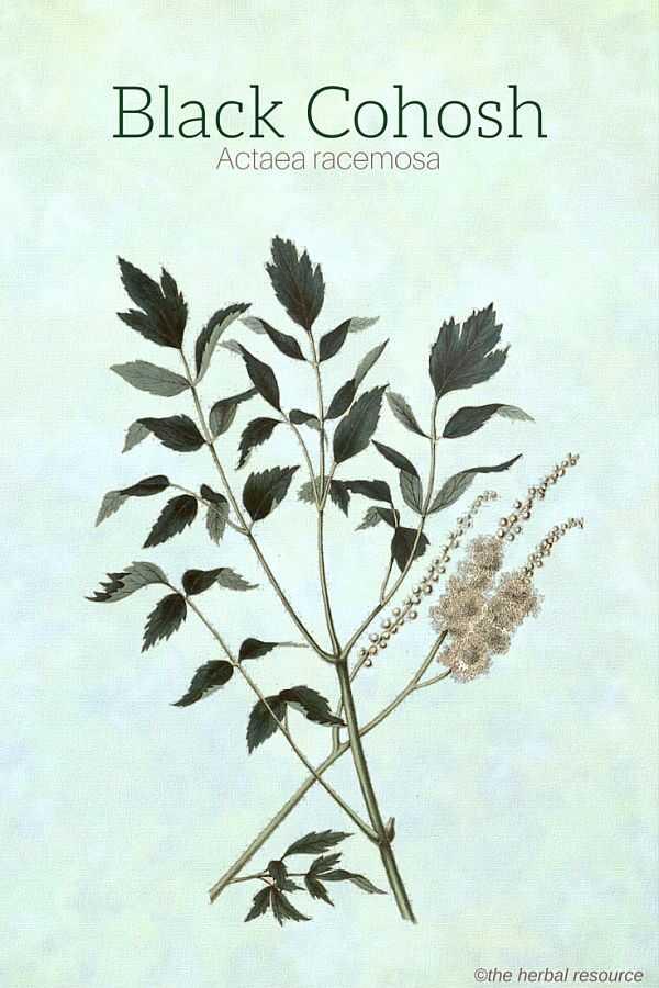 نقش طب سنتی و داروهای گیاهی درمان وزوز گوش